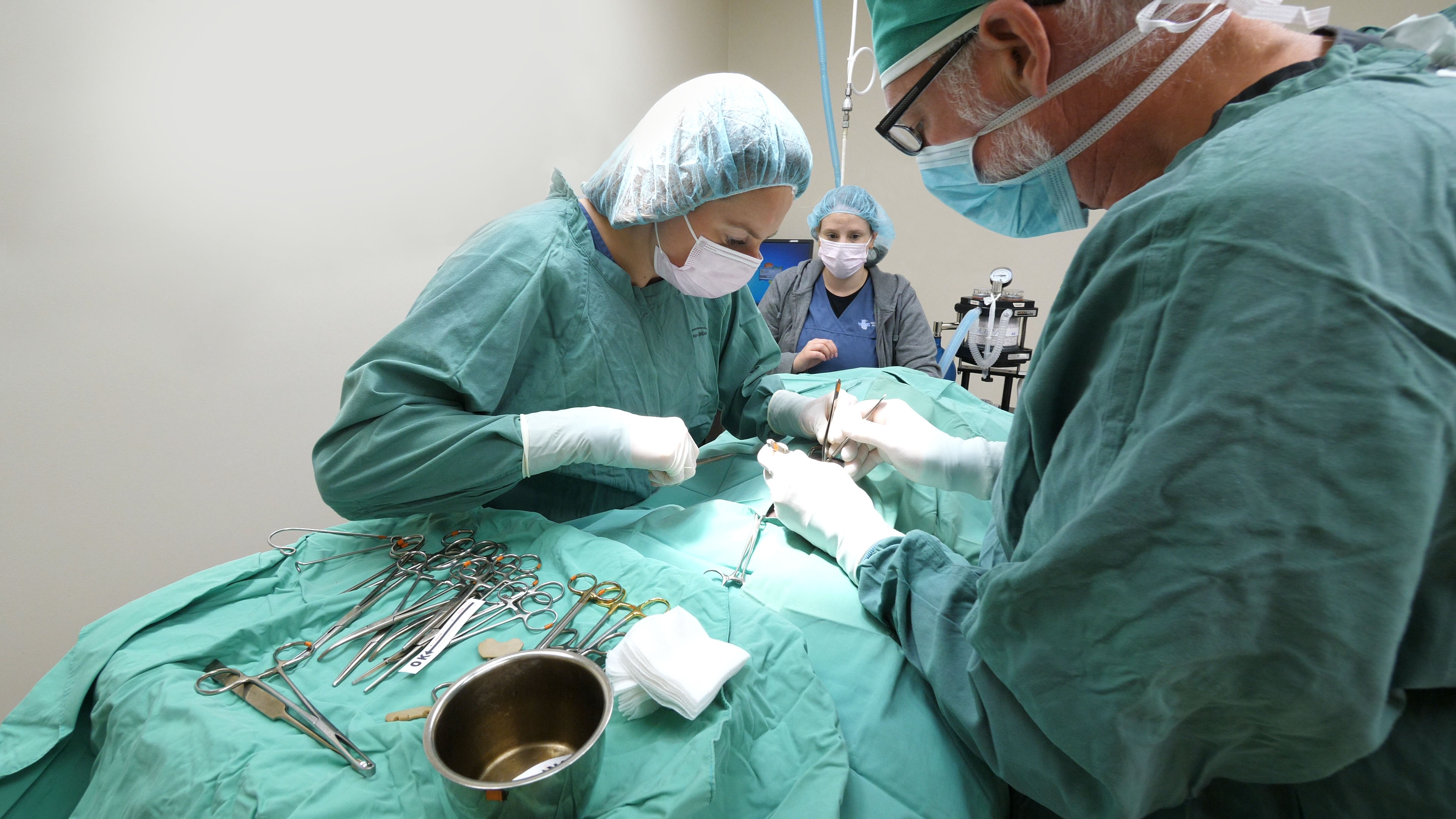 Veterinarians performing surgery