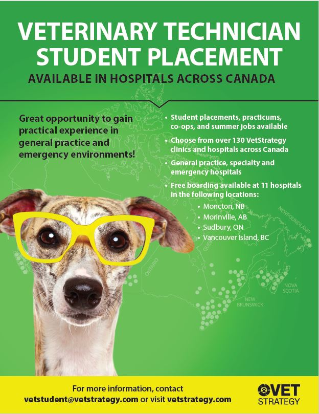 VetStrategy Veterinary Technician Student Placement Flyers PDF